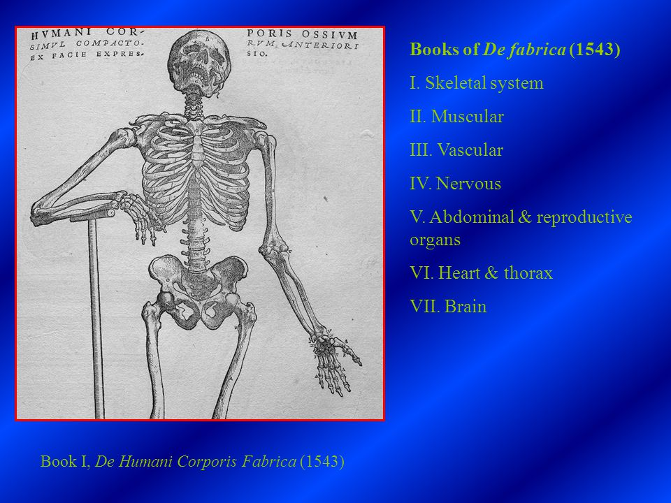 Renaissance Anatomy 1 How Did Vesalius Revolutionize The Study Of