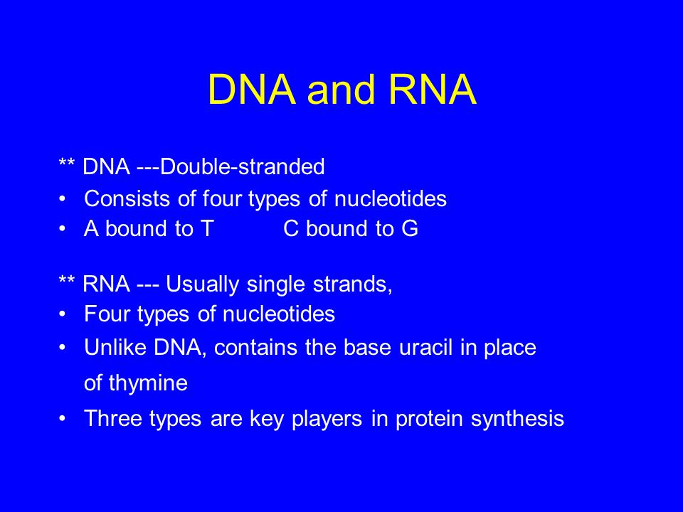 DNA and RNA ** DNA ---Double-stranded Consists of four types of nucleotides A bound to T C bound to G ** RNA --- Usually single strands, Four types of nucleotides Unlike DNA, contains the base uracil in place of thymine Three types are key players in protein synthesis