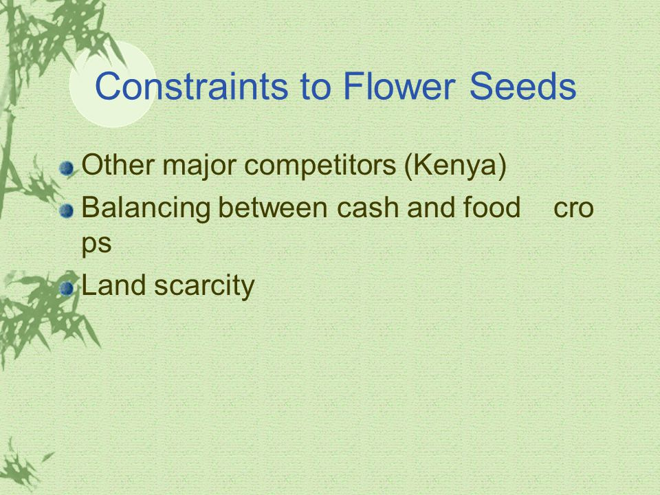 Constraints to Flower Seeds Other major competitors (Kenya) Balancing between cash and food cro ps Land scarcity