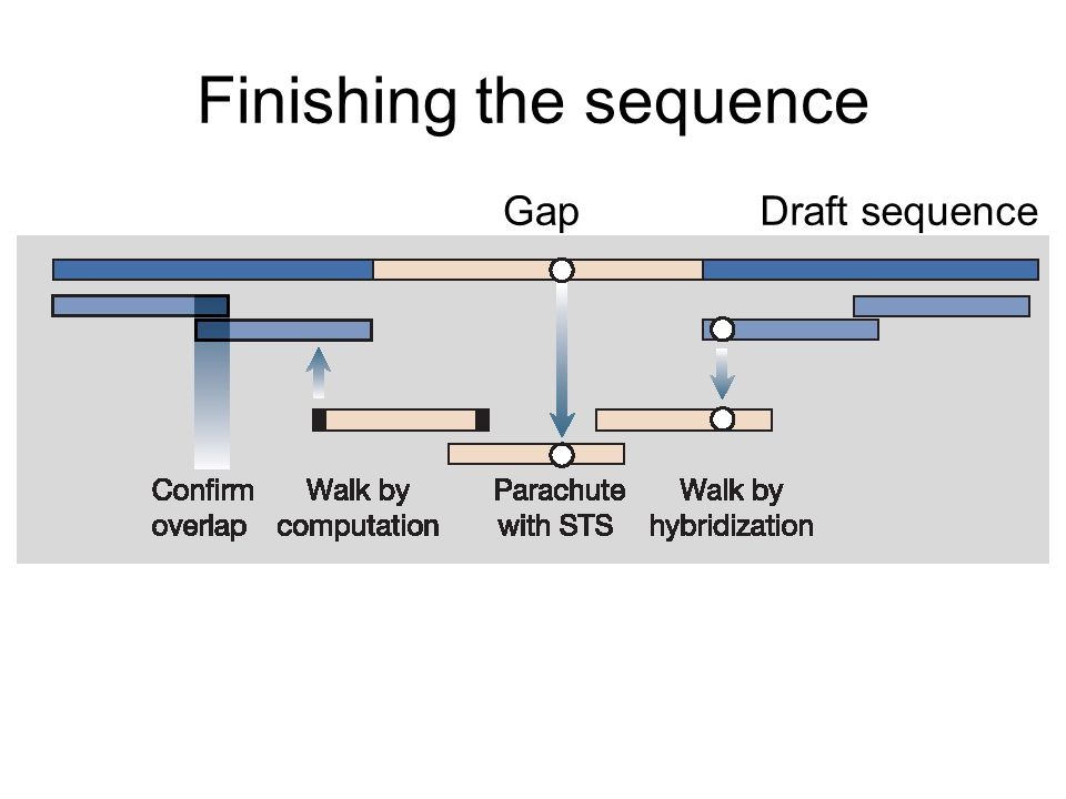 Finishing the sequence GapDraft sequence
