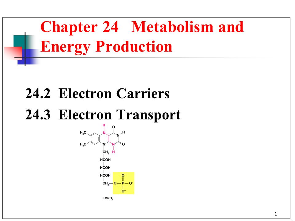 Electron Carriers 24.3 Electron Transport Chapter 24 Metabolism and Energy Production