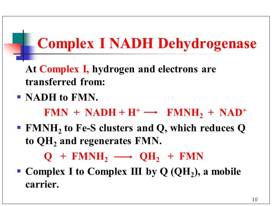 10 At Complex I, hydrogen and electrons are transferred from:  NADH to FMN.