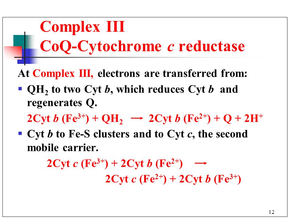 12 At Complex III, electrons are transferred from:  QH 2 to two Cyt b, which reduces Cyt b and regenerates Q.