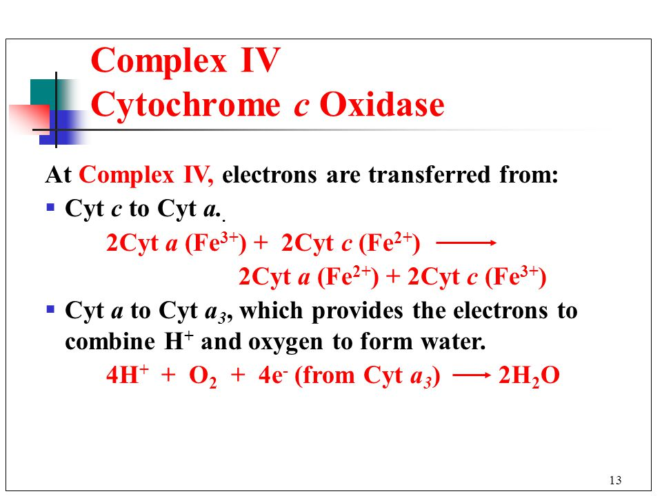 13 Complex IV Cytochrome c Oxidase At Complex IV, electrons are transferred from:  Cyt c to Cyt a..