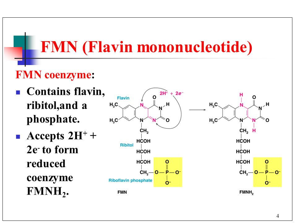 4 FMN (Flavin mononucleotide) FMN coenzyme: Contains flavin, ribitol,and a phosphate.