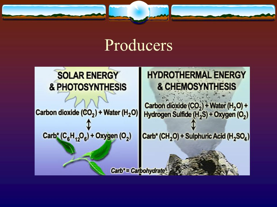 Producers  Autotrophs – self feed  Use sunlight to create carbohydrates via photosynthesis  Ex – Plants, algae and some bacteria  Some bacteria create organic compounds from inorganic chemicals – Chemosynthesis  Live in remote places.