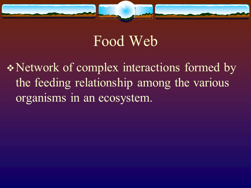 Food Chain Example