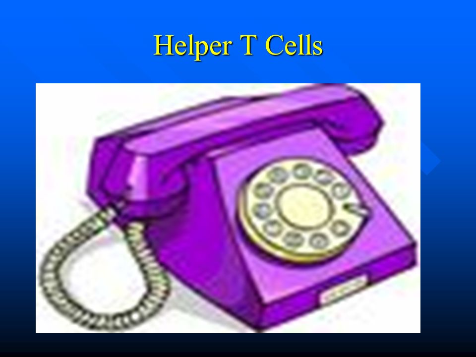 Helper T Cells
