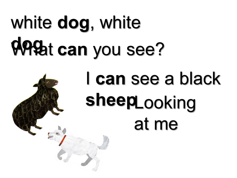 white dog, white dog, What can you see I can see a black sheep Looking at me