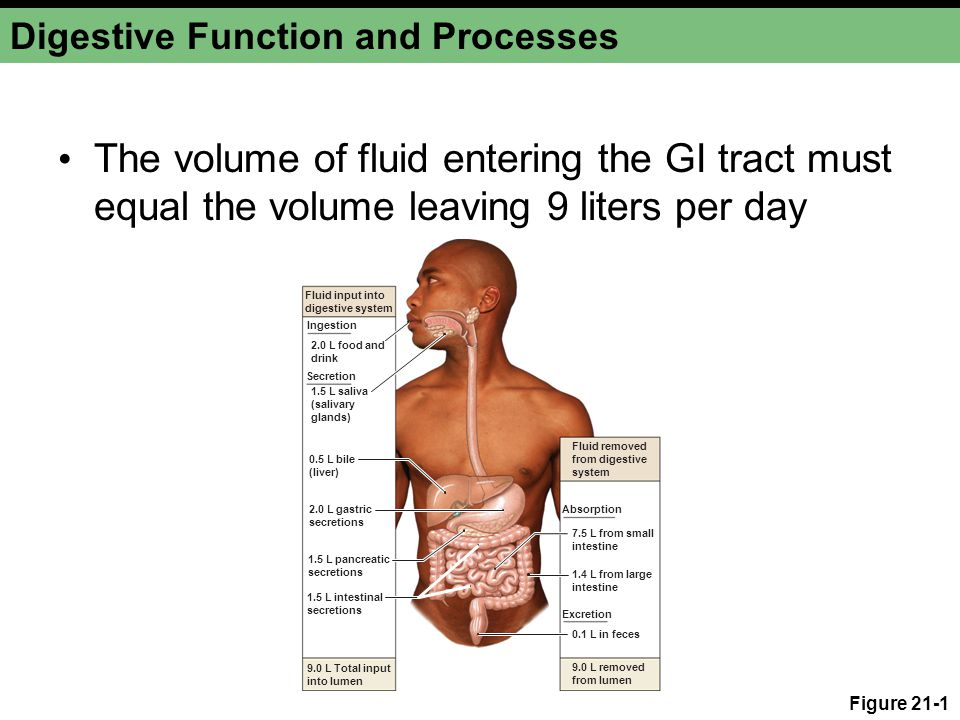 Chapter 21a The Digestive System About This Chapter Digestion