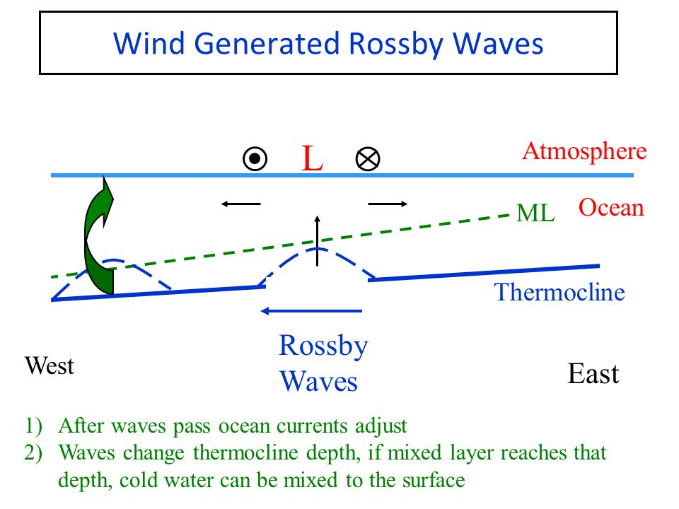 Wind Generated Rossby Waves West East Atmosphere Ocean Thermocline ML L Rossby Waves 1)After waves pass ocean currents adjust 2)Waves change thermocline depth, if mixed layer reaches that depth, cold water can be mixed to the surface