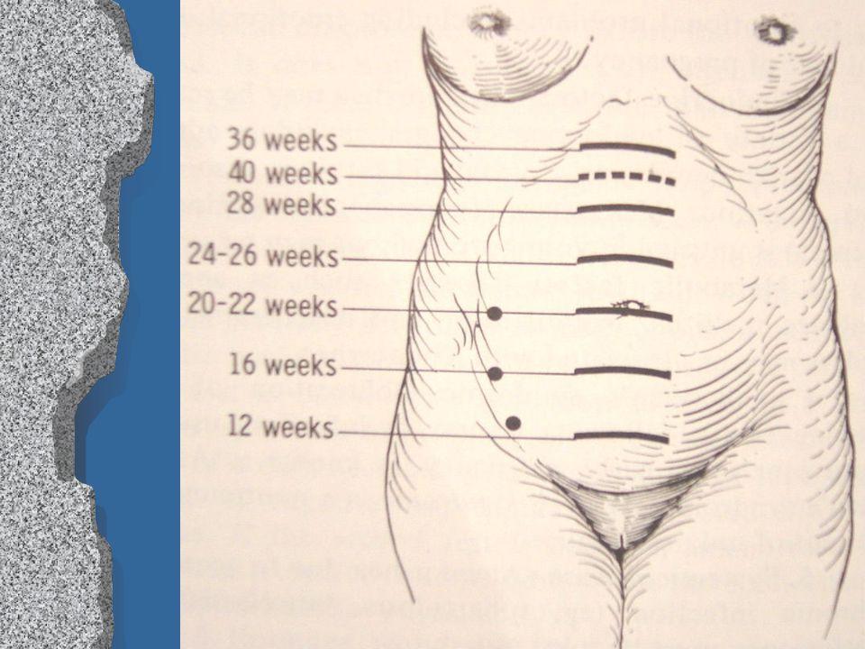 Diagnosis of Pregnancy Liu Wei Department of Ob & Gy Ren Ji