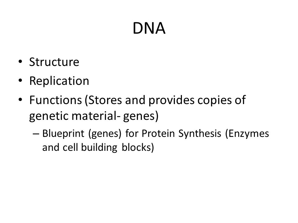 Dna structure replication functions stores and provides copies of 1 dna structure replication functions stores and provides copies of genetic material genes blueprint genes for protein synthesis enzymes and cell malvernweather Image collections