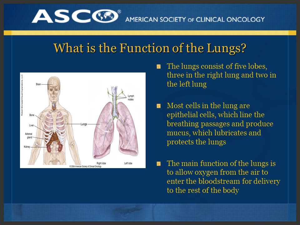 What is the Function of the Lungs.
