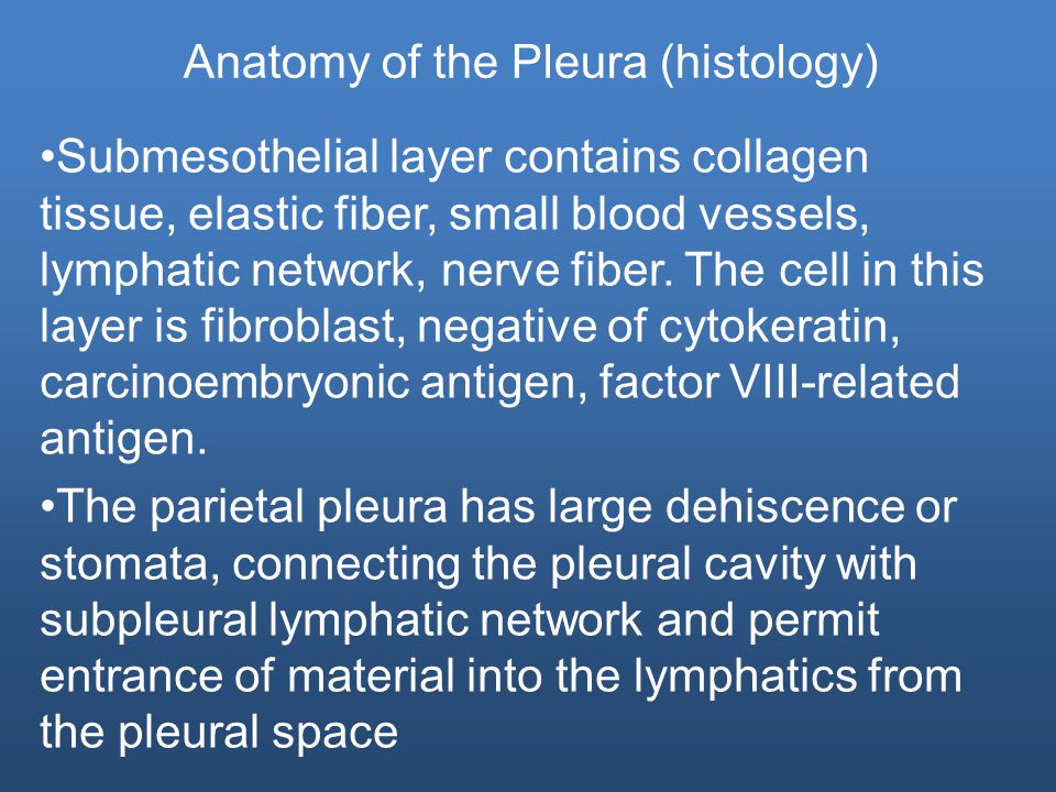 Anatomy of the Pleura (histology) Submesothelial layer contains collagen tissue, elastic fiber, small blood vessels, lymphatic network, nerve fiber.
