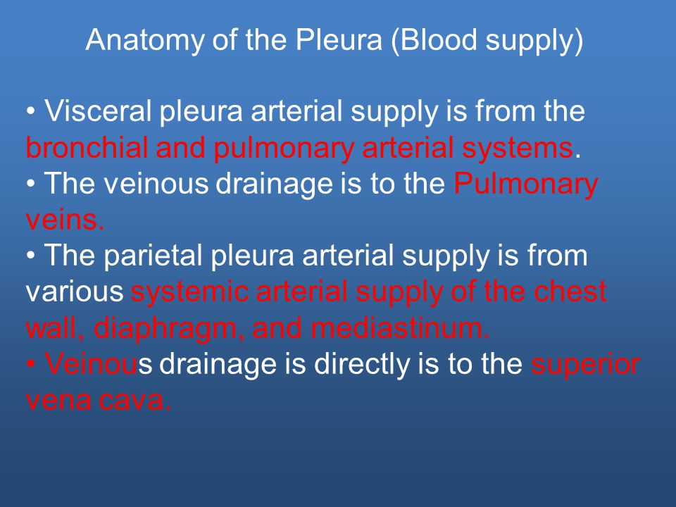 Visceral pleura arterial supply is from the bronchial and pulmonary arterial systems.
