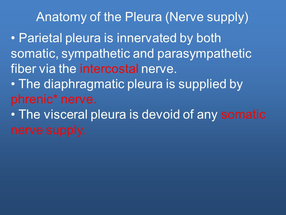 Parietal pleura is innervated by both somatic, sympathetic and parasympathetic fiber via the intercostal nerve.