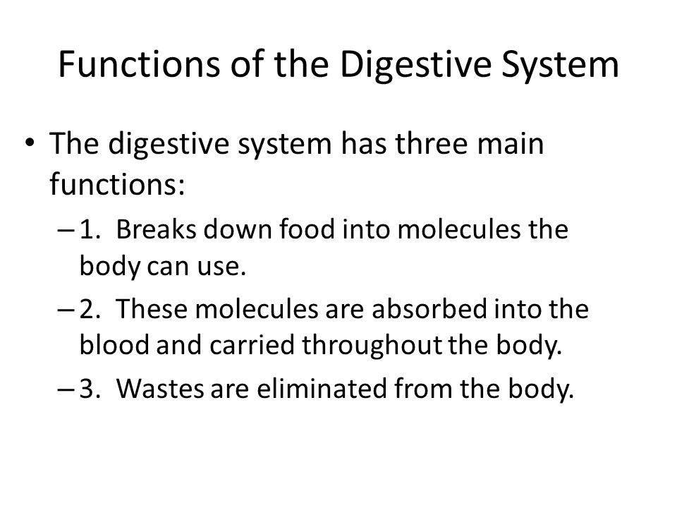 Functions of the Digestive System The digestive system has three main functions: – 1.