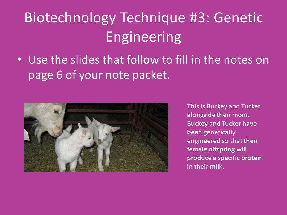 Biotechnology Technique #3: Genetic Engineering Use the slides that follow to fill in the notes on page 6 of your note packet.