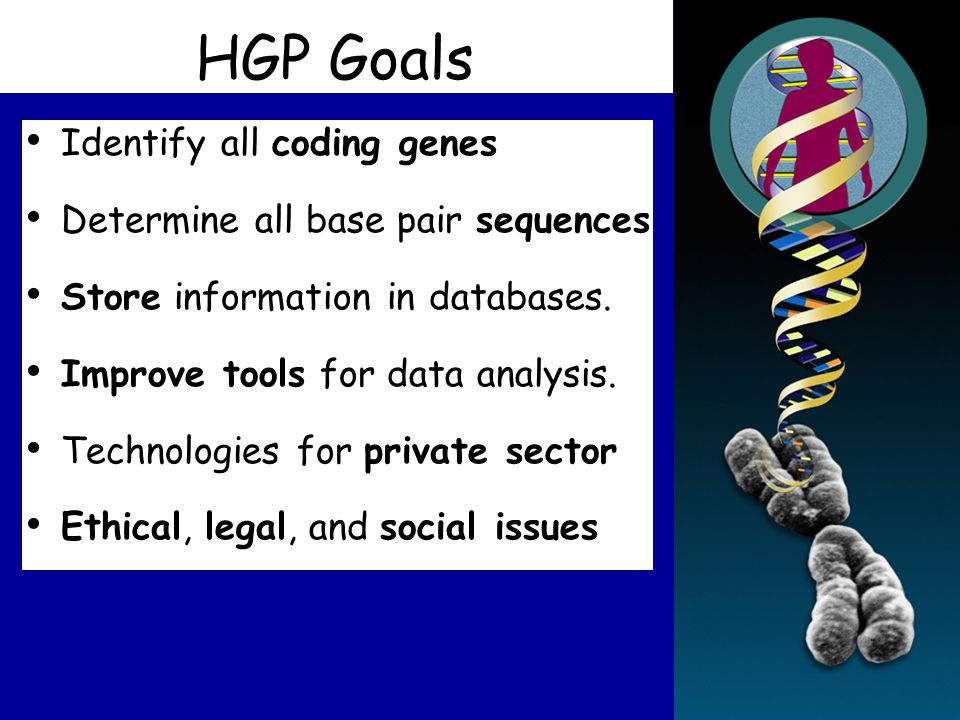 HGP Goals Identify all coding genes Determine all base pair sequences Store information in databases.