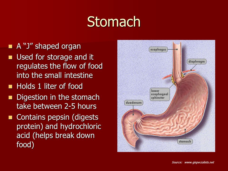 biology the digestive system The digestive system is a reasonably complex set of organs that work collectively to break down ingested food and convert it to energy, vitamins, and nutrients needed to fuel and feed the body.