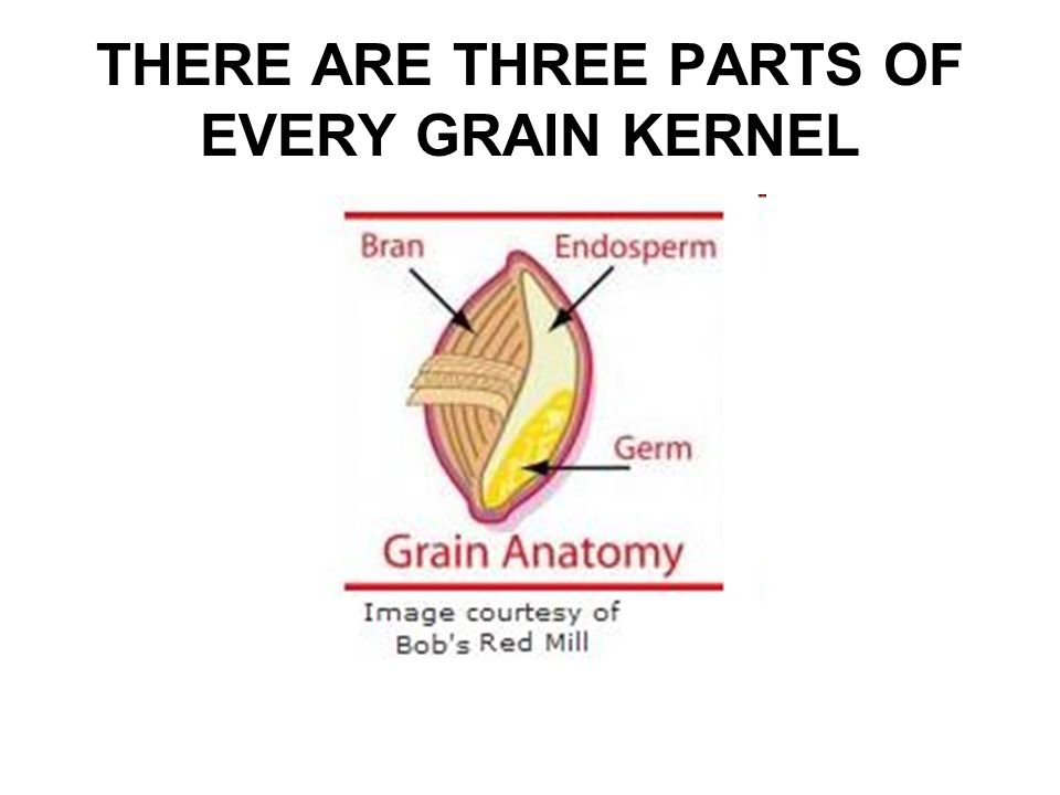 THERE ARE THREE PARTS OF EVERY GRAIN KERNEL