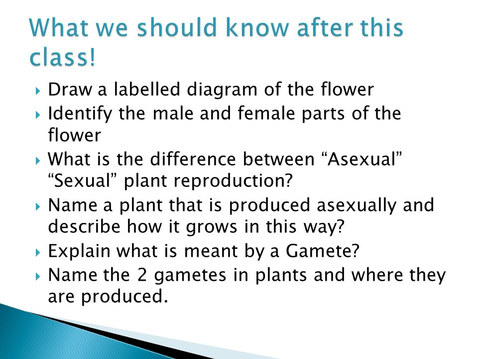 2 nd year science mr cunningham draw a labelled diagram of the draw a labelled diagram of the flower identify the male and female parts of ccuart Gallery