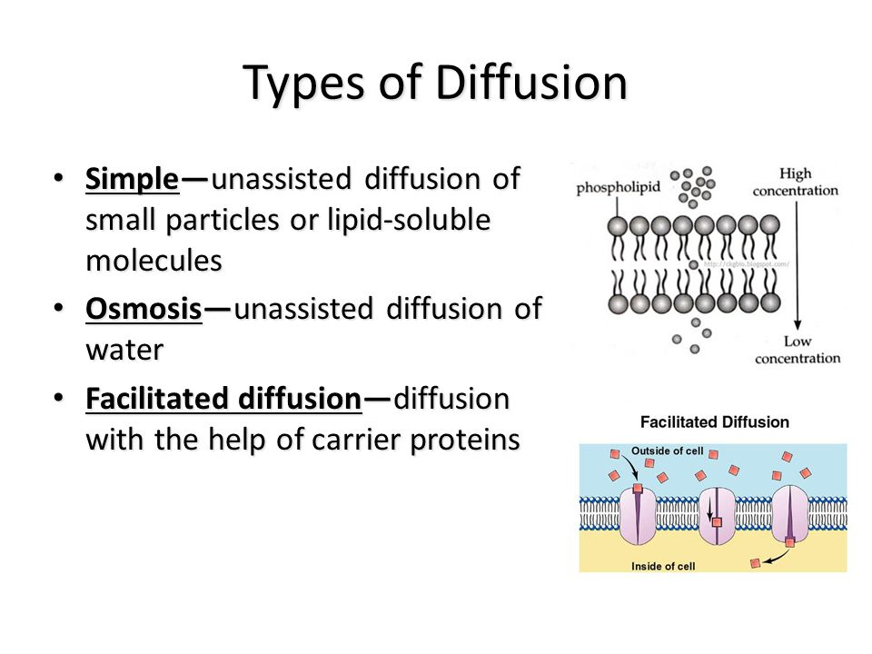 Types of Diffusion Simple—unassisted diffusion of small particles or lipid-soluble molecules Simple—unassisted diffusion of small particles or lipid-soluble molecules Osmosis—unassisted diffusion of water Osmosis—unassisted diffusion of water Facilitated diffusion—diffusion with the help of carrier proteins Facilitated diffusion—diffusion with the help of carrier proteins