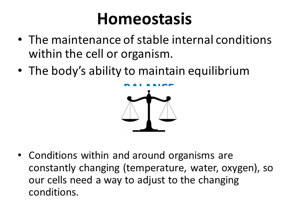 Homeostasis The maintenance of stable internal conditions within the cell or organism.