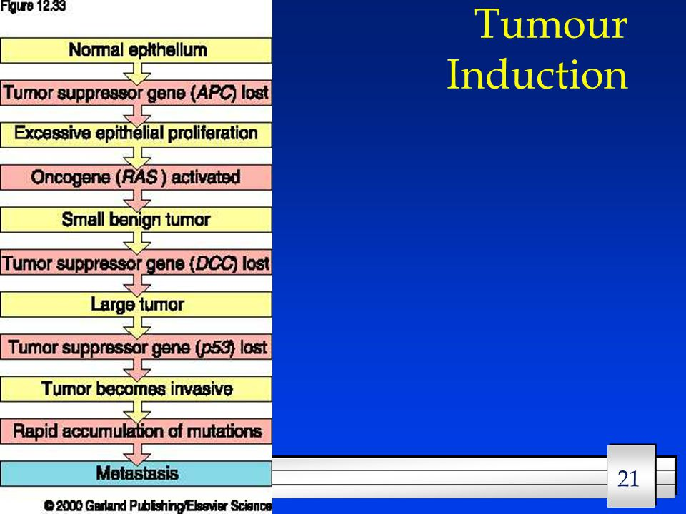 21 8/2/2015 Tumour Induction