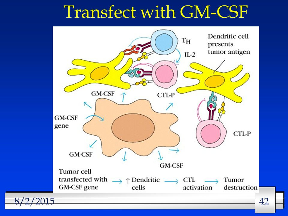 42 8/2/2015 Transfect with GM-CSF
