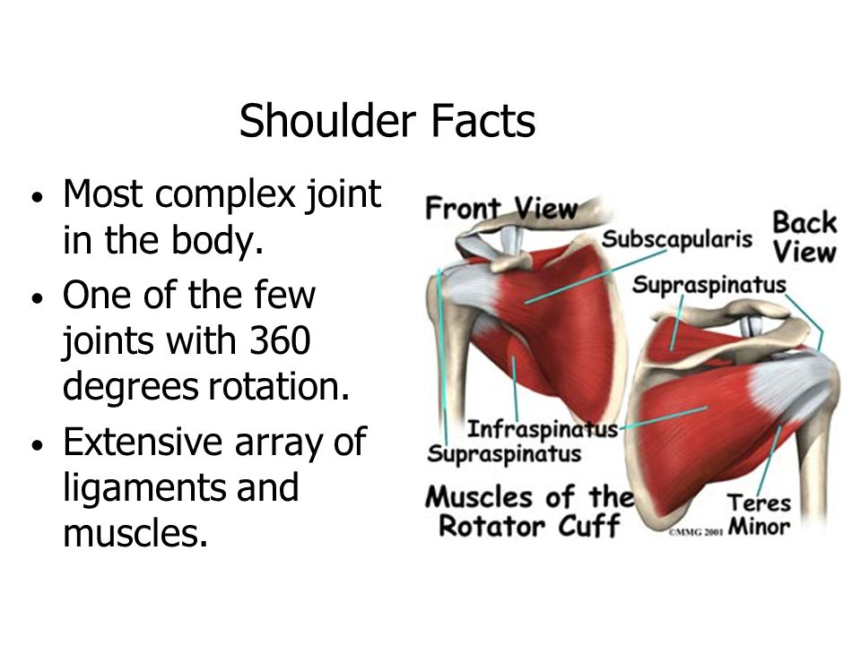 Treatment Options For Severe Shoulder Pain Anatomy Of The Shoulder