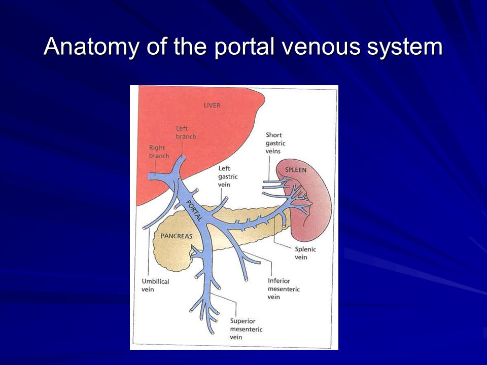 Anatomy of the portal venous system