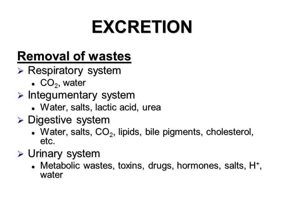 EXCRETION Removal of wastes  Respiratory system CO 2, water CO 2, water  Integumentary system Water, salts, lactic acid, urea Water, salts, lactic acid, urea  Digestive system Water, salts, CO 2, lipids, bile pigments, cholesterol, etc.