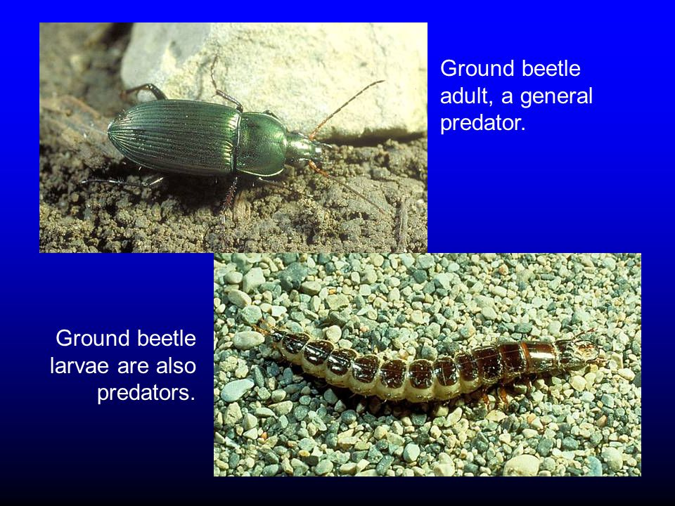 Perimeter Pest Control: Household Invaders Associated with