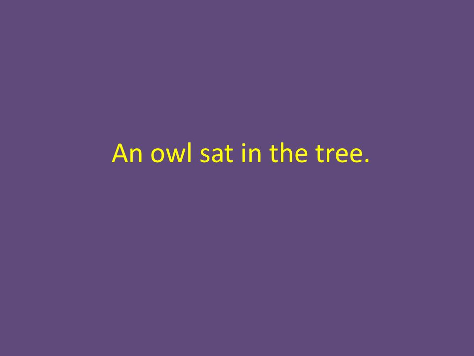 An owl sat in the tree.