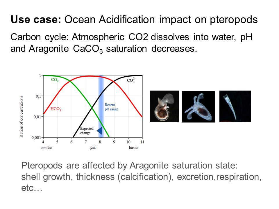 Use case: Ocean Acidification impact on pteropods Carbon cycle: Atmospheric CO2 dissolves into water, pH and Aragonite CaCO 3 saturation decreases.