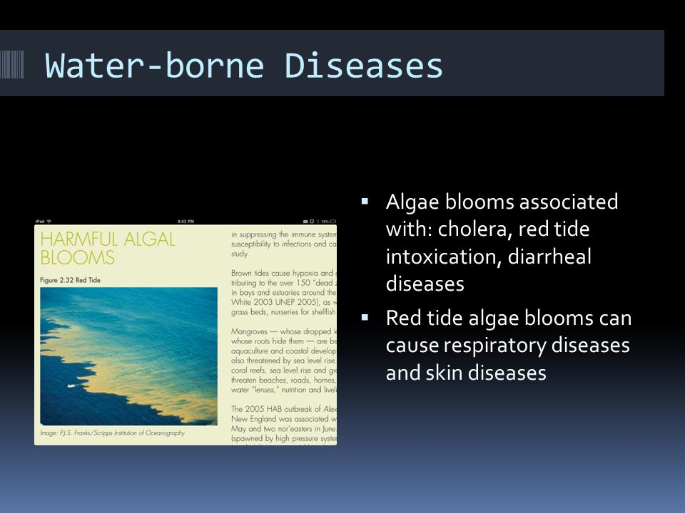 Water-borne Diseases  Algae blooms associated with: cholera, red tide intoxication, diarrheal diseases  Red tide algae blooms can cause respiratory diseases and skin diseases