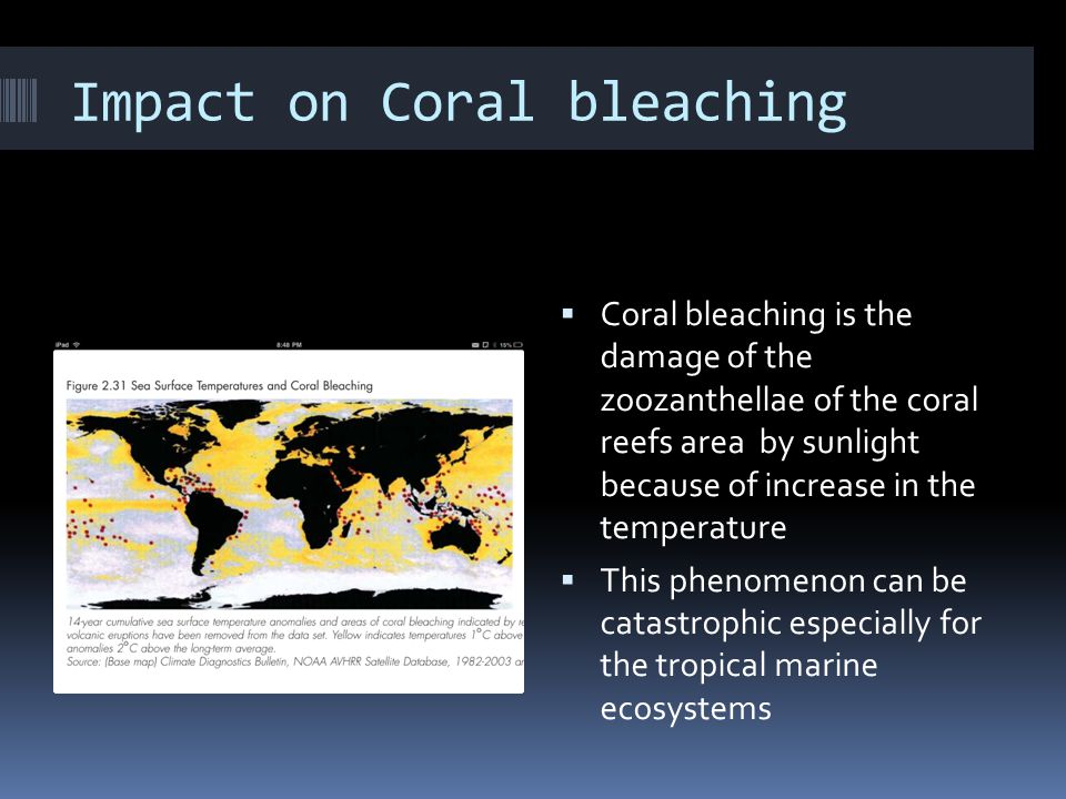 Impact on Coral bleaching  Coral bleaching is the damage of the zoozanthellae of the coral reefs area by sunlight because of increase in the temperature  This phenomenon can be catastrophic especially for the tropical marine ecosystems