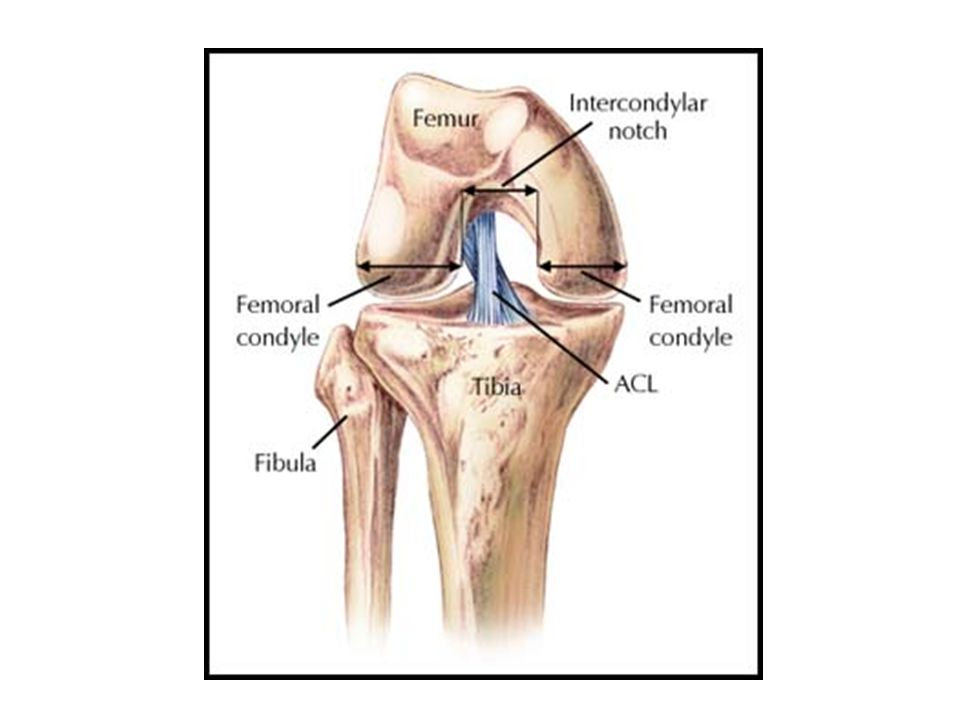 KNEE INJURIES Review Gross and Functional Anatomy. Discuss traumatic ...