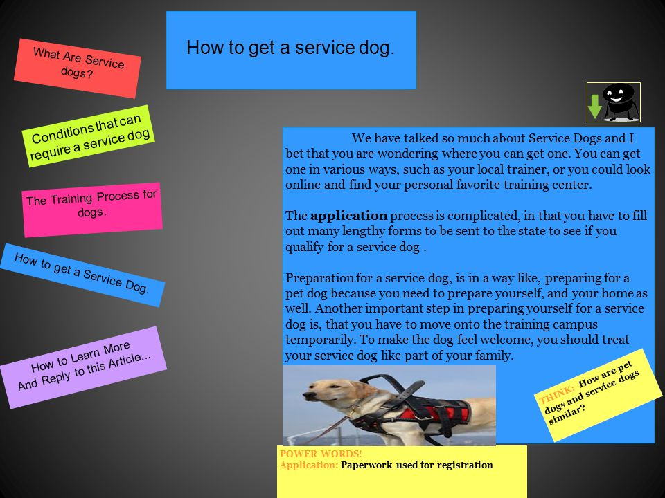 Service Dogs The Unspoken Heroes By William Paul Stamoulis