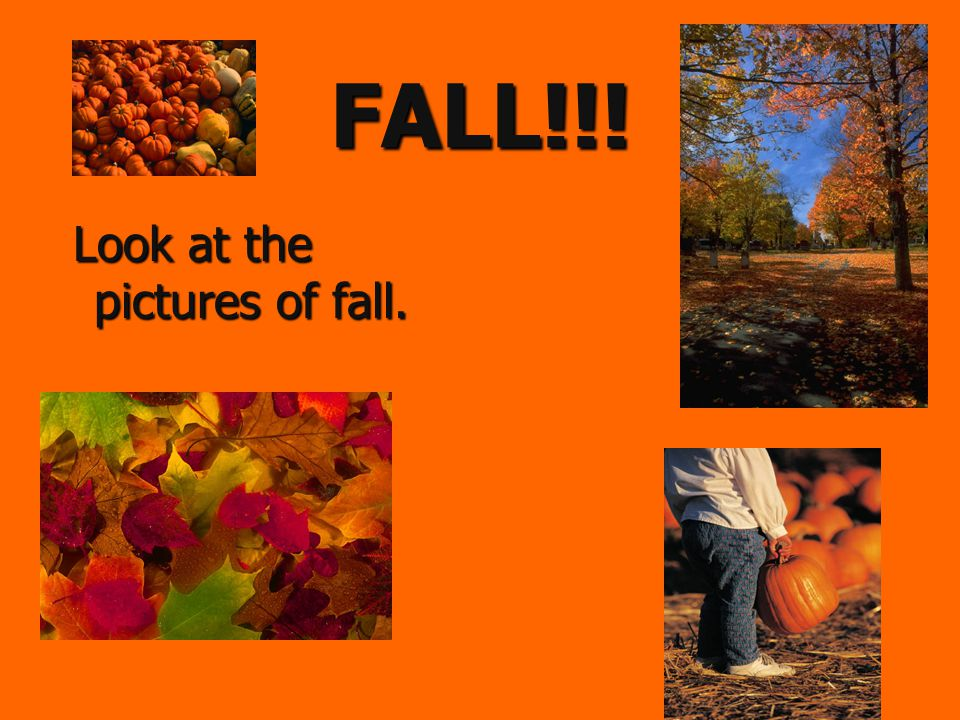 Name the Season  The temperature is cool.  Leaves change colors and then fall on the ground.