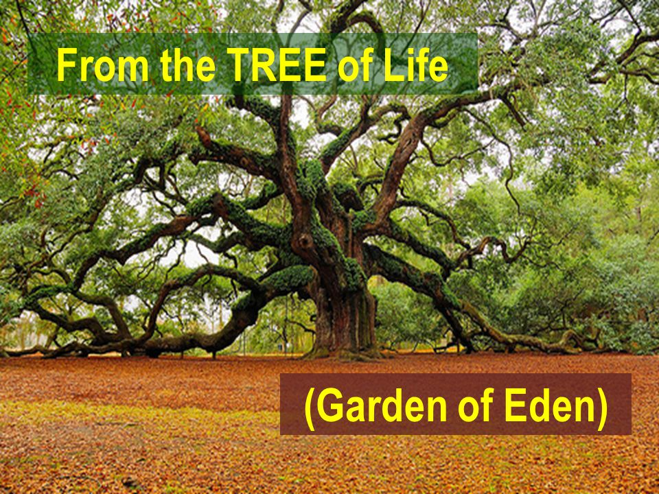 4 (Garden Of Eden) From The TREE Of Life