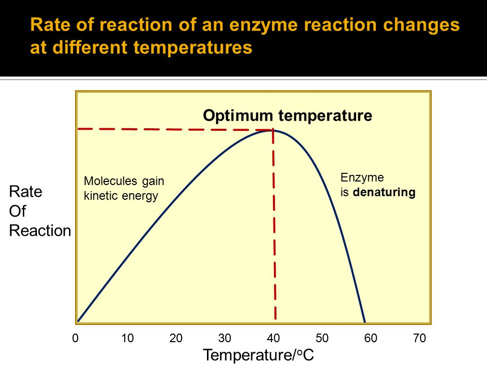 Rate Of Reaction Temperature/ o C Optimum temperature Enzyme is denaturing Rate of reaction of an enzyme reaction changes at different temperatures Molecules gain kinetic energy