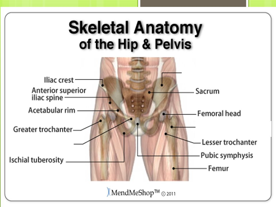 Anatomy Injuries To The Thigh Hip And Pelvis Ppt Video Online