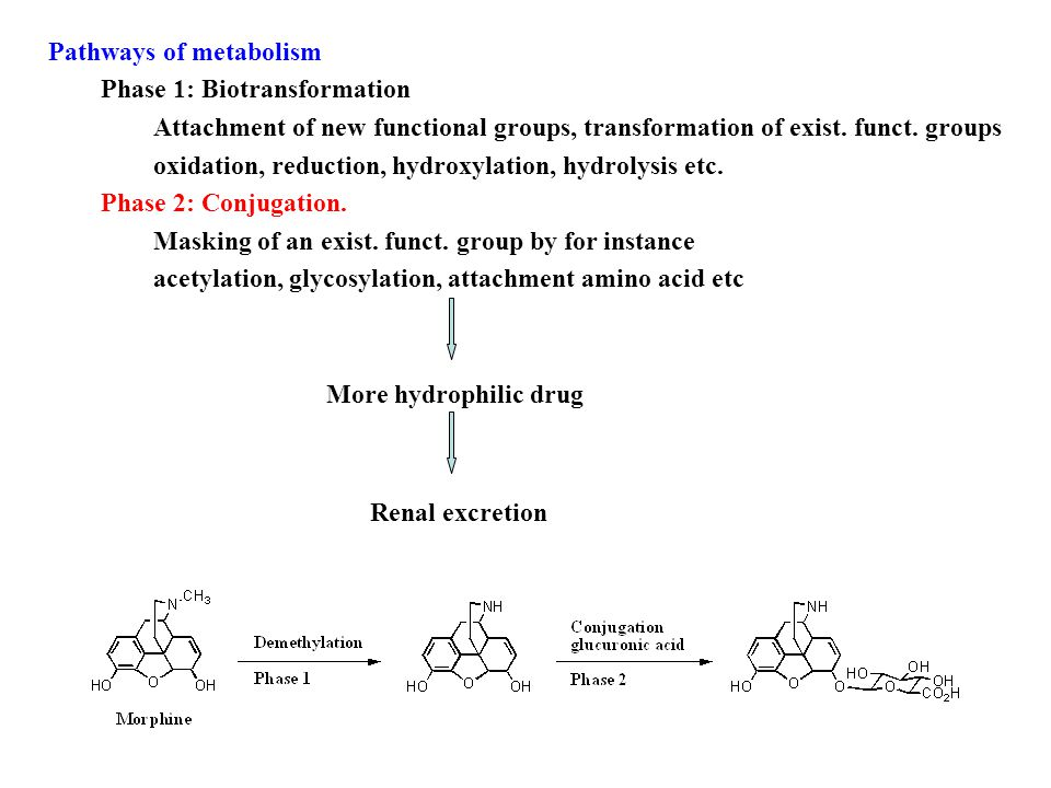 Pathways of metabolism Phase 1: Biotransformation Attachment of new functional groups, transformation of exist.
