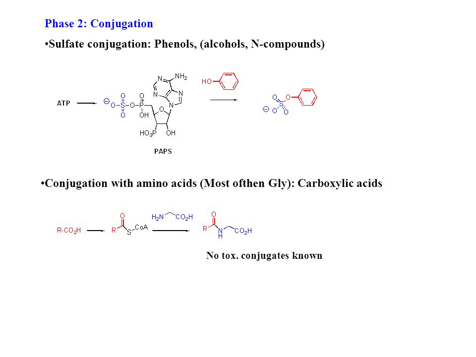 Phase 2: Conjugation Sulfate conjugation: Phenols, (alcohols, N-compounds) Conjugation with amino acids (Most ofthen Gly): Carboxylic acids No tox.