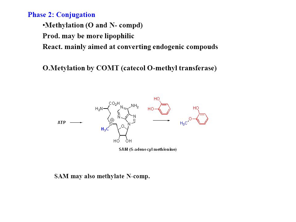 Phase 2: Conjugation Methylation (O and N- compd) Prod.