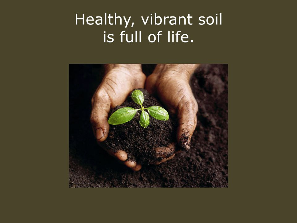 Healthy, vibrant soil is full of life.
