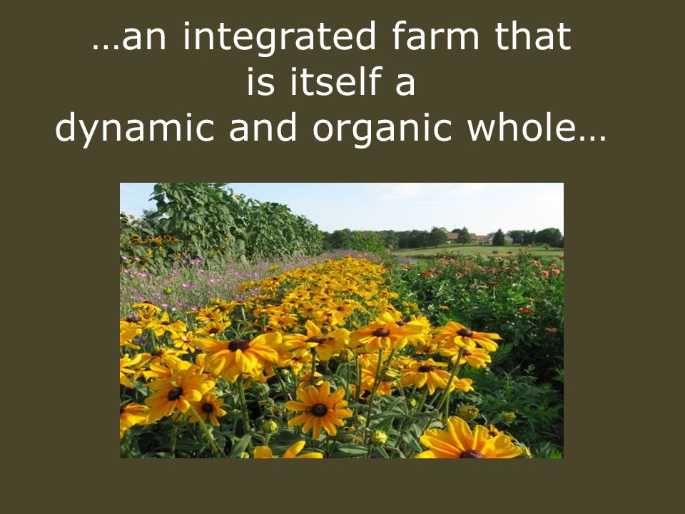 …an integrated farm that is itself a dynamic and organic whole…